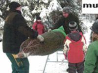 Weihnachtsbaum-Aktion
